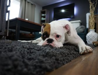 Reasons Why You Should Bring A Pet Home Right Away!